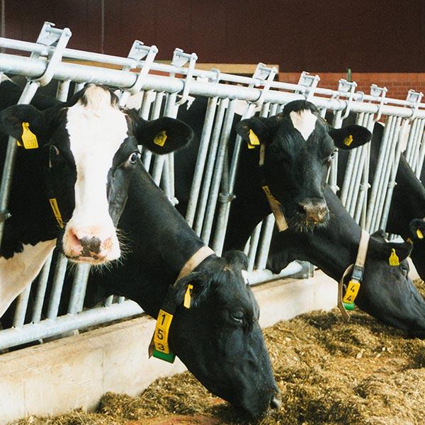 Melk- und Kühltechnik